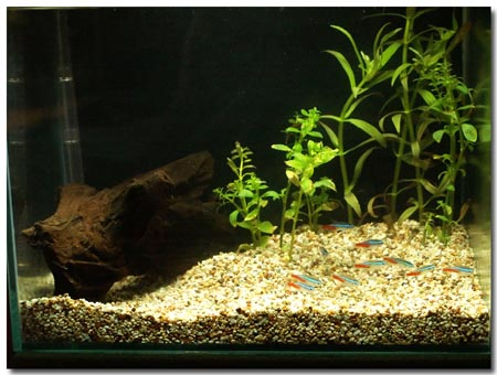 2006-Aquarium-PICT1426-neons-small.jpg