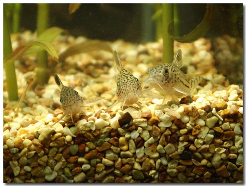 blog-too-many-corys.jpg
